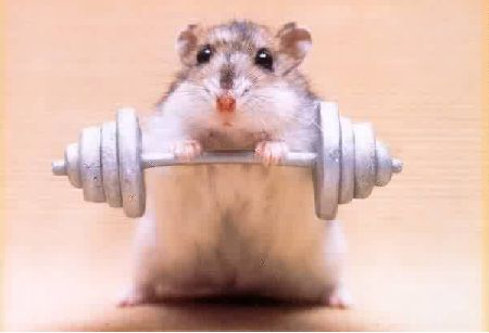 Hamster-weight-Lifting-hamsters-29682128-450-307